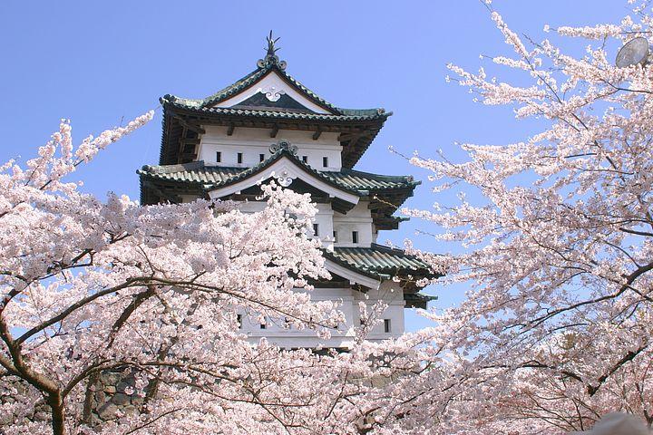 castello di Hirosaki con fiori di ciliegio